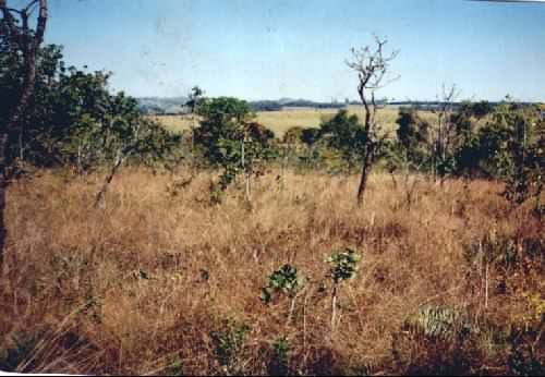 """Cerrado Brasileiro"""