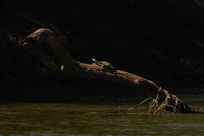 DSC_0212_Rio das Velhas no trecho Augusto de Lima - Lassance_Biodiversidades