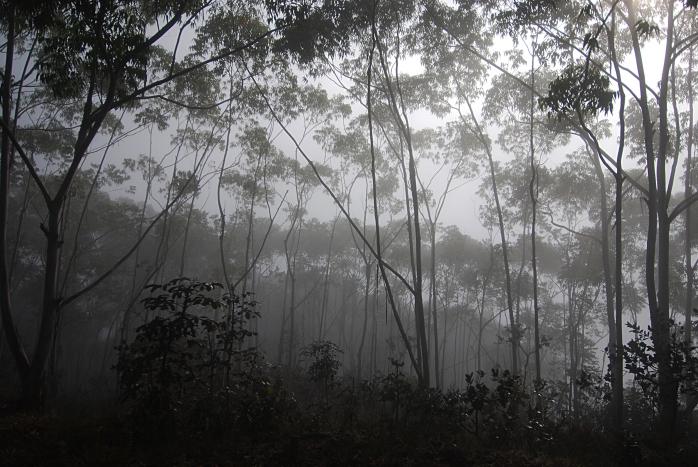 DSC_4163 - Flora encontrada no trecho Balneário Rio de Pedras - Represa de Acuruí