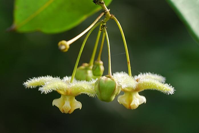 DSC_4180 - Flora encontrada próximo a Represa de Acuruí