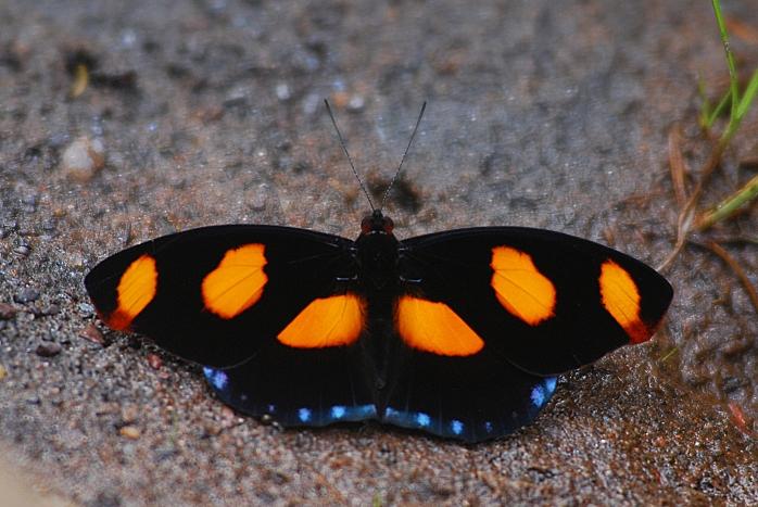 DSC_4293 - Fauna encontrada no trecho Acuruí - Rio Acima
