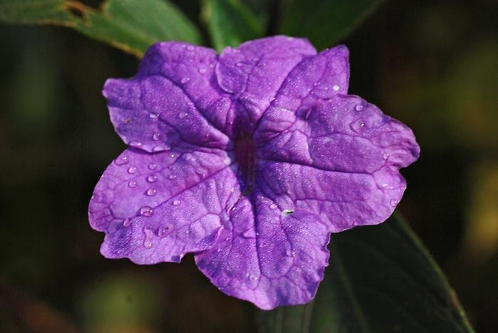 DSC_4507 - Flora encontrada em Rio Acima