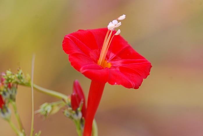 DSC_4841 - Flora encontrada no município de Raposos