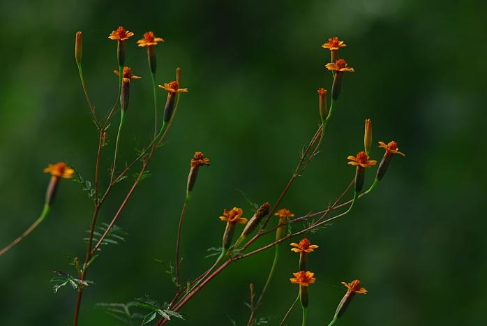 DSC_5273 - Flora encontrada próximo ao rio das Velhas com a foz do Arrudas