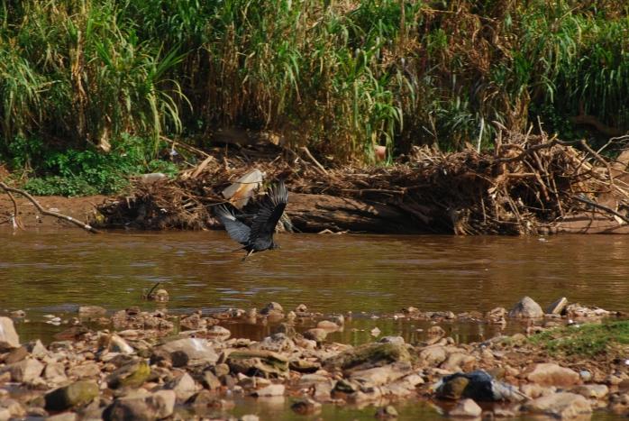 DSC_5287 - Rio das Velhas em Sabará
