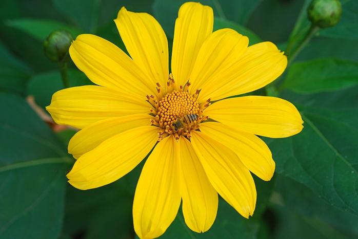 DSC_5337 - Flora encontrada próximo ao rio das Velhas com a foz do Arrudas